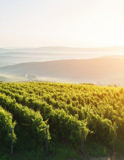 Pikasi Wines web cover